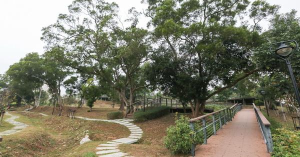 《台中.沙鹿》公館公園-整排相思樹還有大樟樹,開滿花的馬纓丹