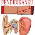 Pengertian Telinga Beserta Fungsi dan Bagiannya