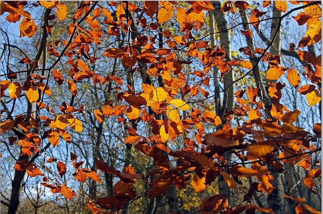 Buy wallart of Autumn Leaves