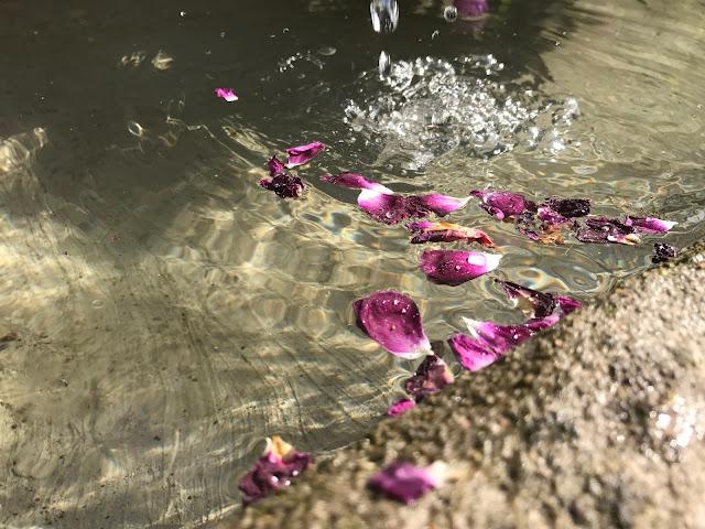 Rosenblätter schwimmen auf dem Wasser  (c) by Joachim Wenk
