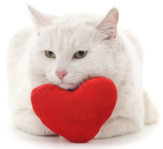 What are the best Valentine's Day gifts for cats?