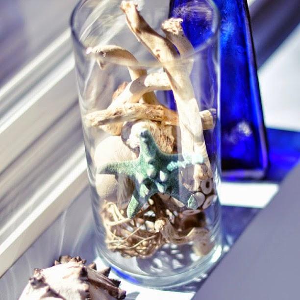 shells behind glass
