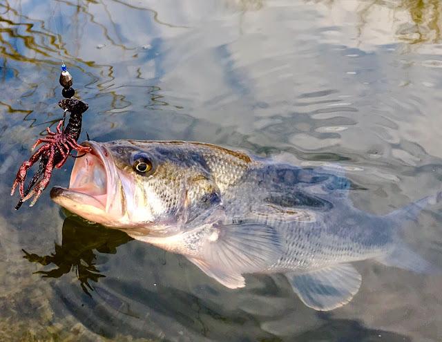 Újabb hal randevú