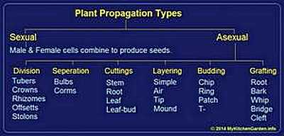 Plant Propagation Methods