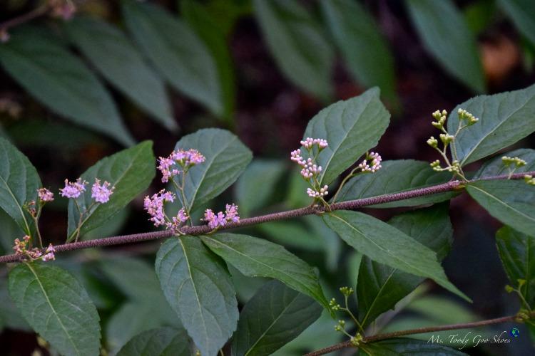 Beauty Berries | Ms. Toody Goo Shoes