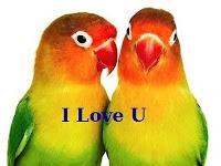 Ciri-Ciri Burung Lovebird Betina Adalah