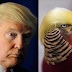Bird becomes an internet sensation in China because people think he has the same hairstyle as Donald Trump (Photos)
