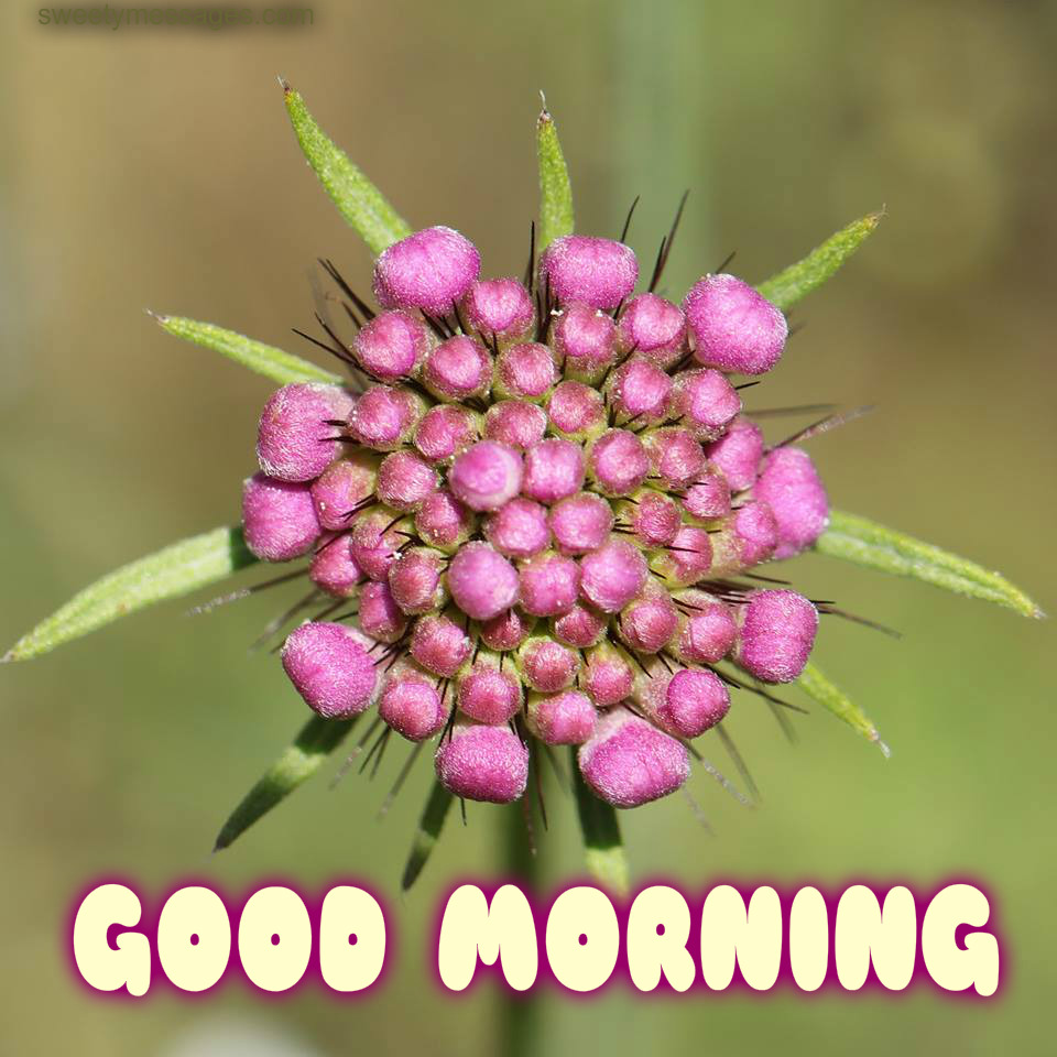 Good Morning Images With Flowers Beautiful Messages