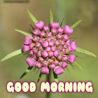 good mornig card with beautiful flowers