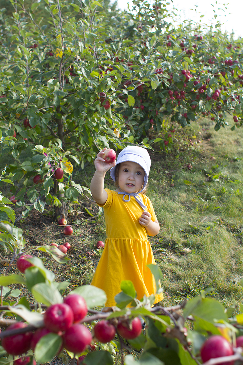 Apple Orchard Edmonton
