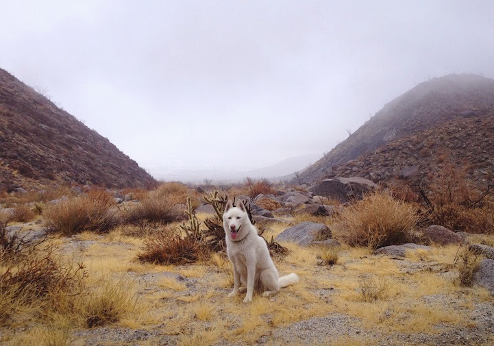 Anza-Borrego desert, California - He Toured America's Pristine Wilderness…And He Took His Human Along For The Ride.