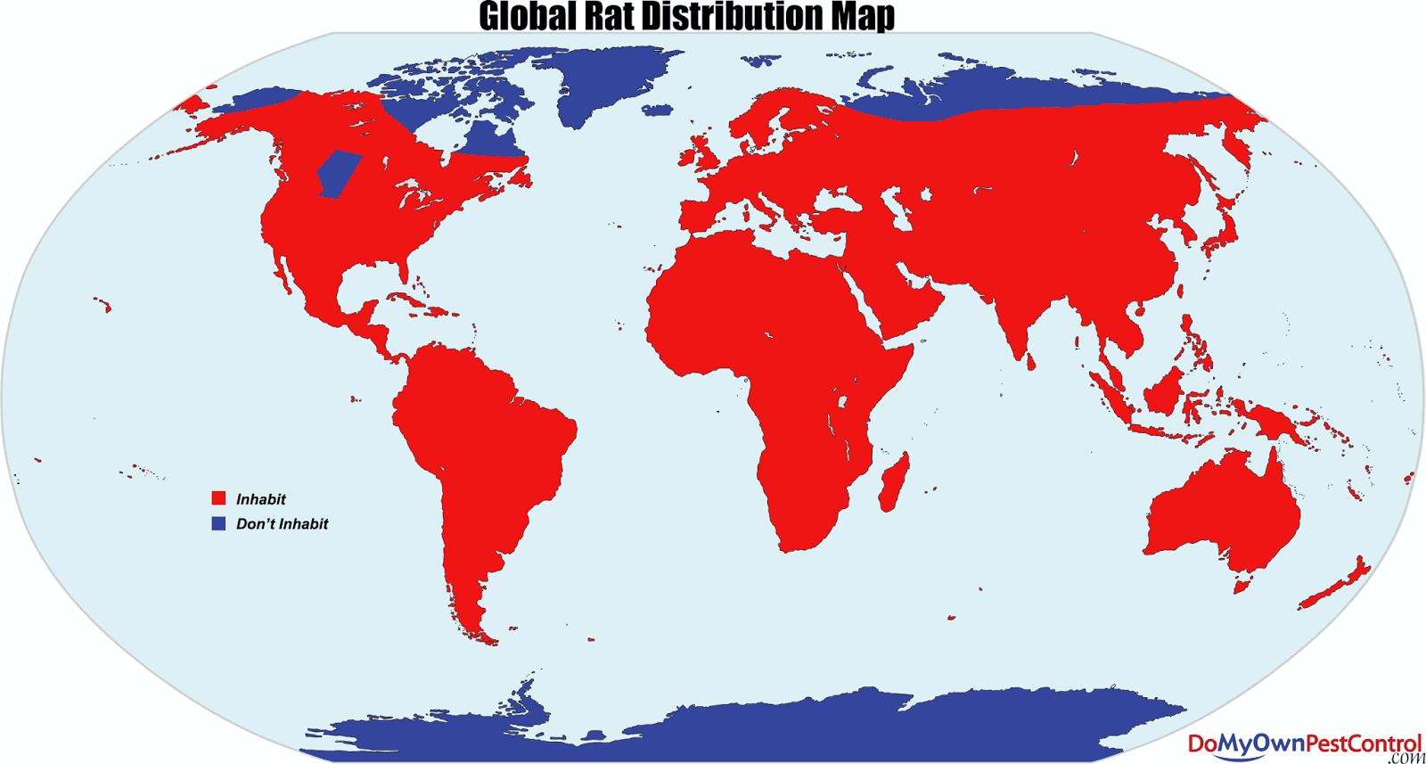 Global rat distribution map