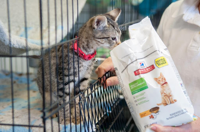 Kitten in a cage looking at a bag of Hill's food