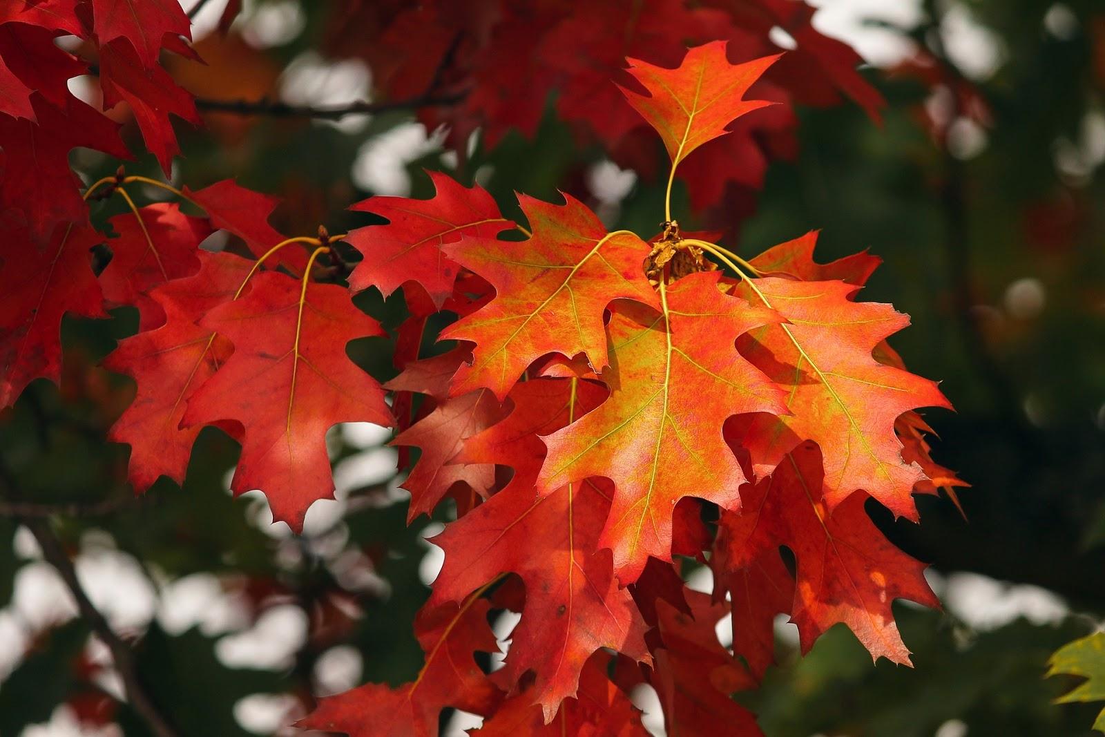 jak poprawić  sobie nastrój w jesienny wieczór