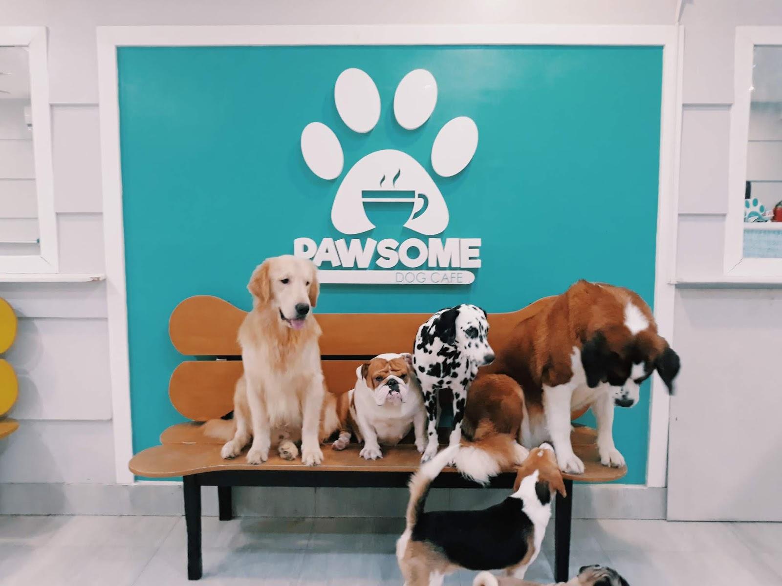 Pawsome Dog Cafe Queen C