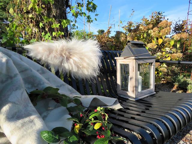 En høstdag i Furulunden - Haybenken rundt furua - kledd til høst.