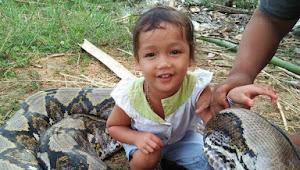 Anak Perempuan Yang Duduk Diatas Ular Besar Ini Ternyata Baru Berumur 4 Tahun