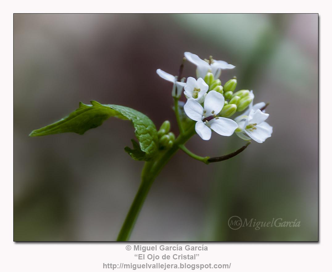 Flores de los Caminos.