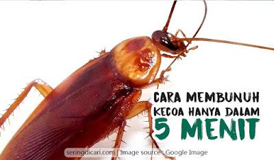 Cara Ampuh Membunuh Kecoa dalam 5 Menit