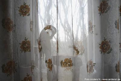 en julbock i grådaskigt skånskt fönster