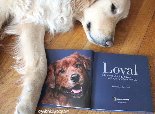 Loyal book review about 38 heroic dogs and their owners