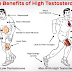 Foods That Help to Increase Testosterone Quickly and Naturally