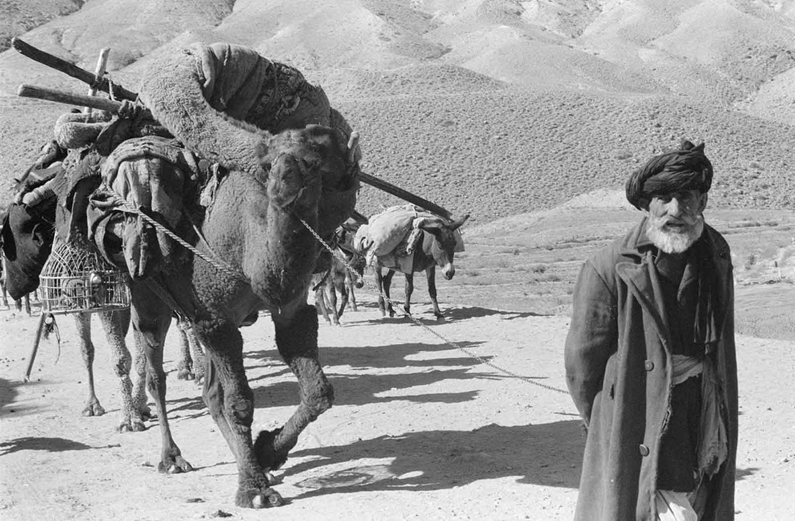Afghan man leading laden camels and donkeys through an arid, rocky landscape, in November, 1959.