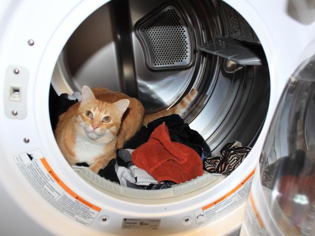 Grief healing pet loss curious cats get killed in clothes dryers pet loss curious cats get killed in clothes dryers spiritdancerdesigns Images