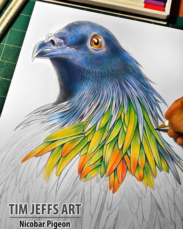 10-Nicobar-Pigeon-Tim-Jeffs-www-designstack-co