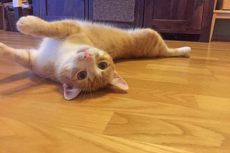 ginger cat, cat on floor, Summer Flooring Trends