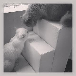 gatos proteção na sacada