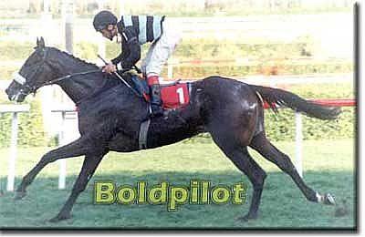 bold pilot