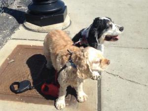 cães e choque eletrico