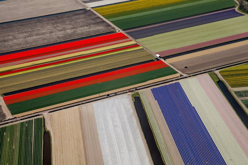Campos tulipanes Holanda. Tulip Fields Netherlands