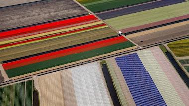 Rojo, amarillo, azul...el espacio y los paisajes de Mondrian en Keukenhof 2017
