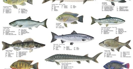 sites de rencontres libre abondance de poissons