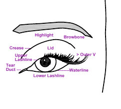 Parts Of The Eyelid Diagram 2 Way Lighting Wiring Uk Make Up Jungle Eye Chart