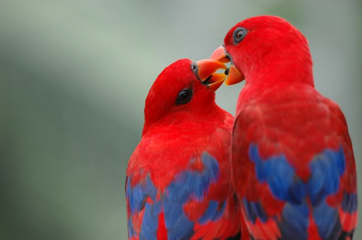 cute love bird colorful parrot images hd wallpapers