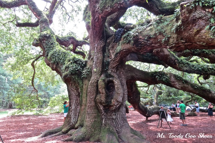 Angel Oak Tree - Johns Island, SC --- Ms. Toody Goo Shoes