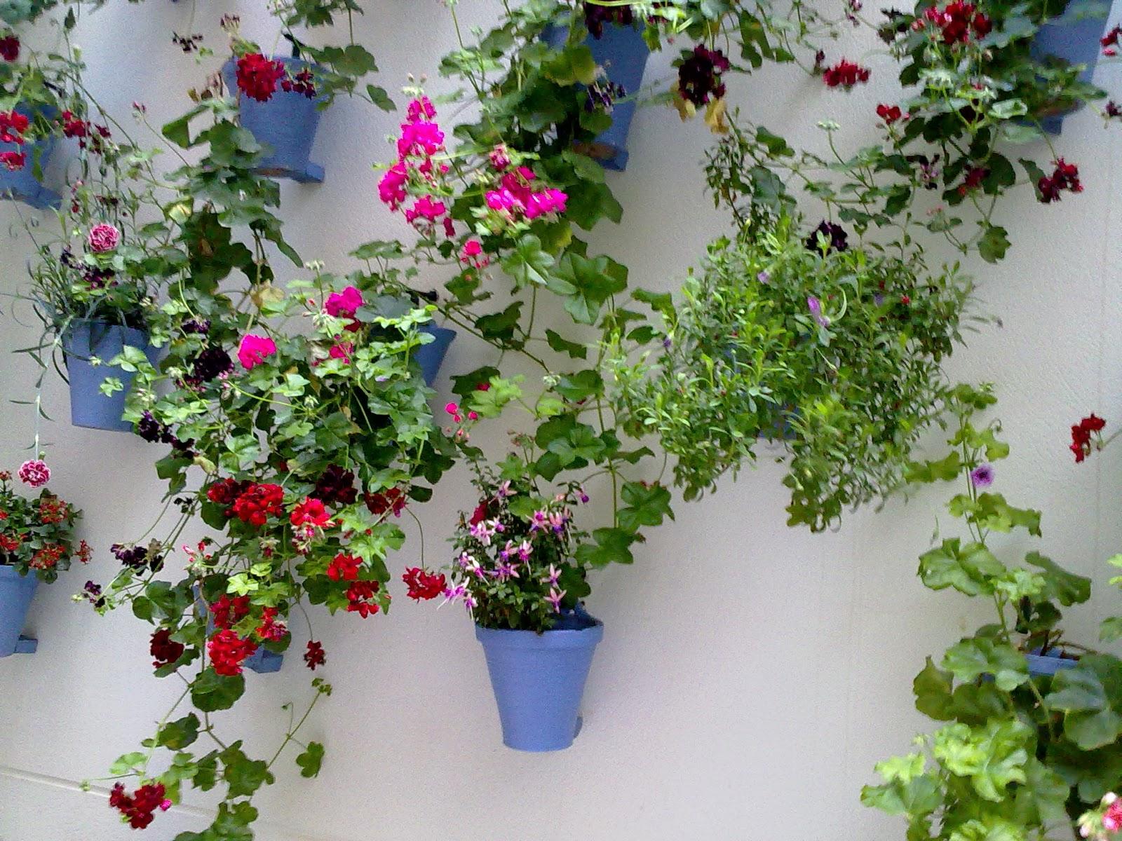Entre patios y plantas gitanillas y patios for Patios con plantas