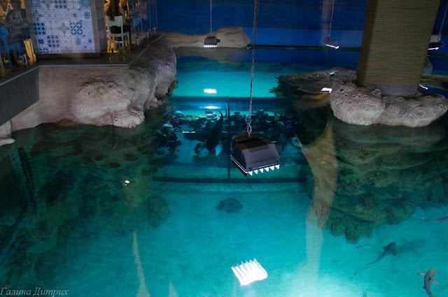 Москвариум бассеин с акулами