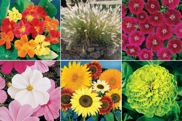 Imágenes de Plantas Ornamentales