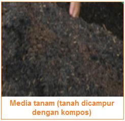 Media tanam (tanah dicampur dengan kompos) - Media Tanam Bahan Organik