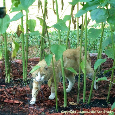 Orange male tabby cat in the sunflower garden