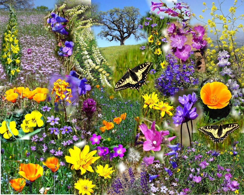 Yellow Color Wallpapers: Beautiful Spring Wallpapers