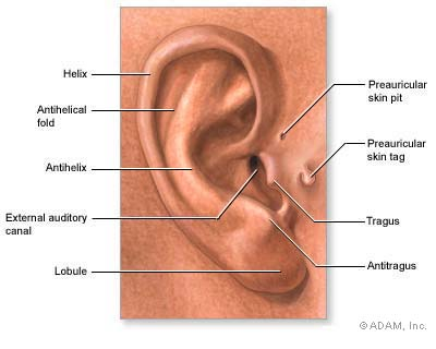 Are You Wondering What That Tiny Extra Hole In Your Ear Is For? You Better Check This Out!