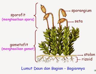 lumut daun dan bagiannya