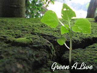 Green A.Live
