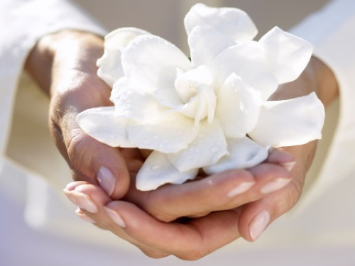 #PraCegoVer: Mãos com uma flor.