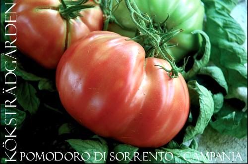 """italian tomatoes"""